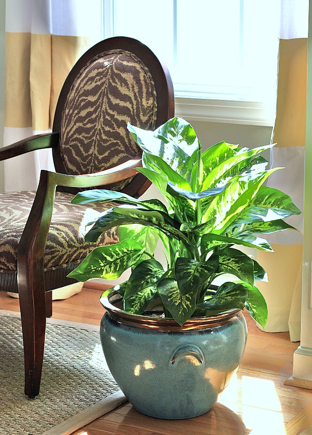 10 Houseplants that Clean the Air - Page 3 of 11 - Sand ...